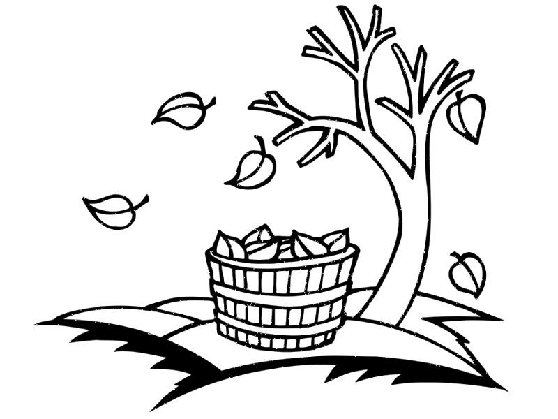 Llega el otoño !!. Actividades para la llegada del Otoño
