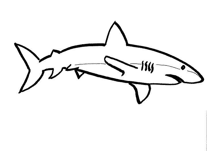 Dibujos De Animales Acuaticos Para Colorear E Imprimir: Animales Acuáticos Para Colorear