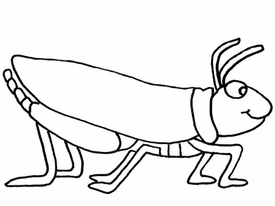 Fichas de Insectos