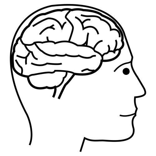 Cerebro para colorear para niños - Imagui