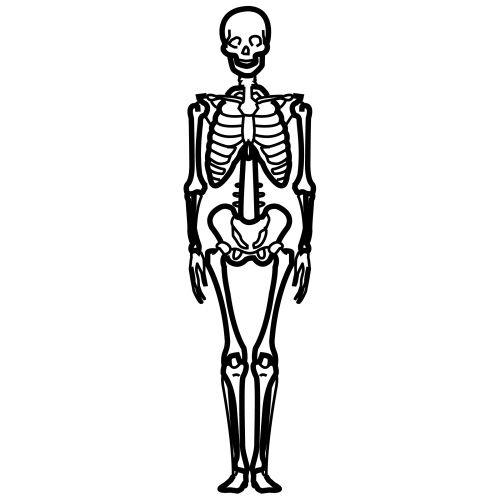 Pictogramas del cuerpo humano Recursos para el aula