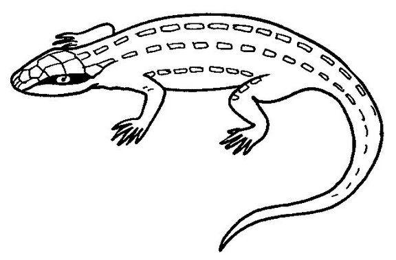 Recursos educativos:Fichas de reptiles - Escuela en la nube ...
