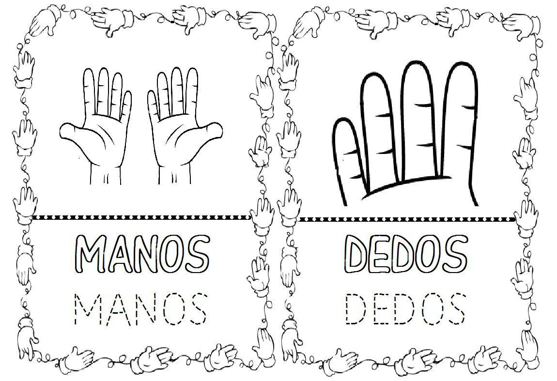 Partes del cuerpo humano para colorear: manos y dedos