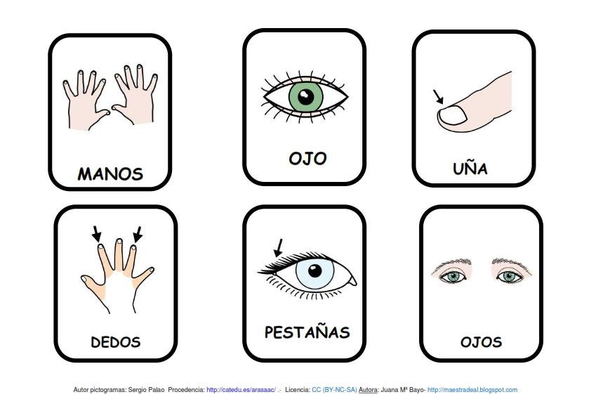Contemporáneo Partes De Pata Del Cuerpo Humano Imagen - Imágenes de ...