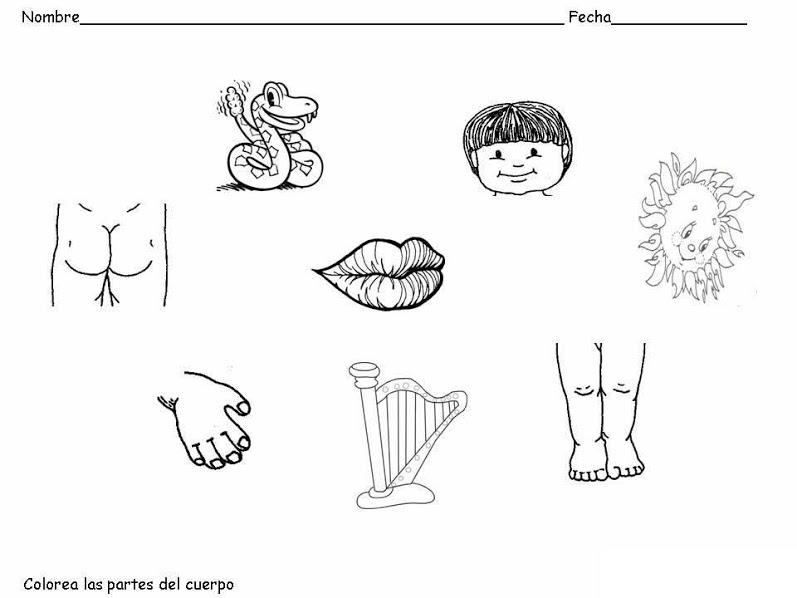Recursos para el aula: El cuerpo humano - Escuela en la nube