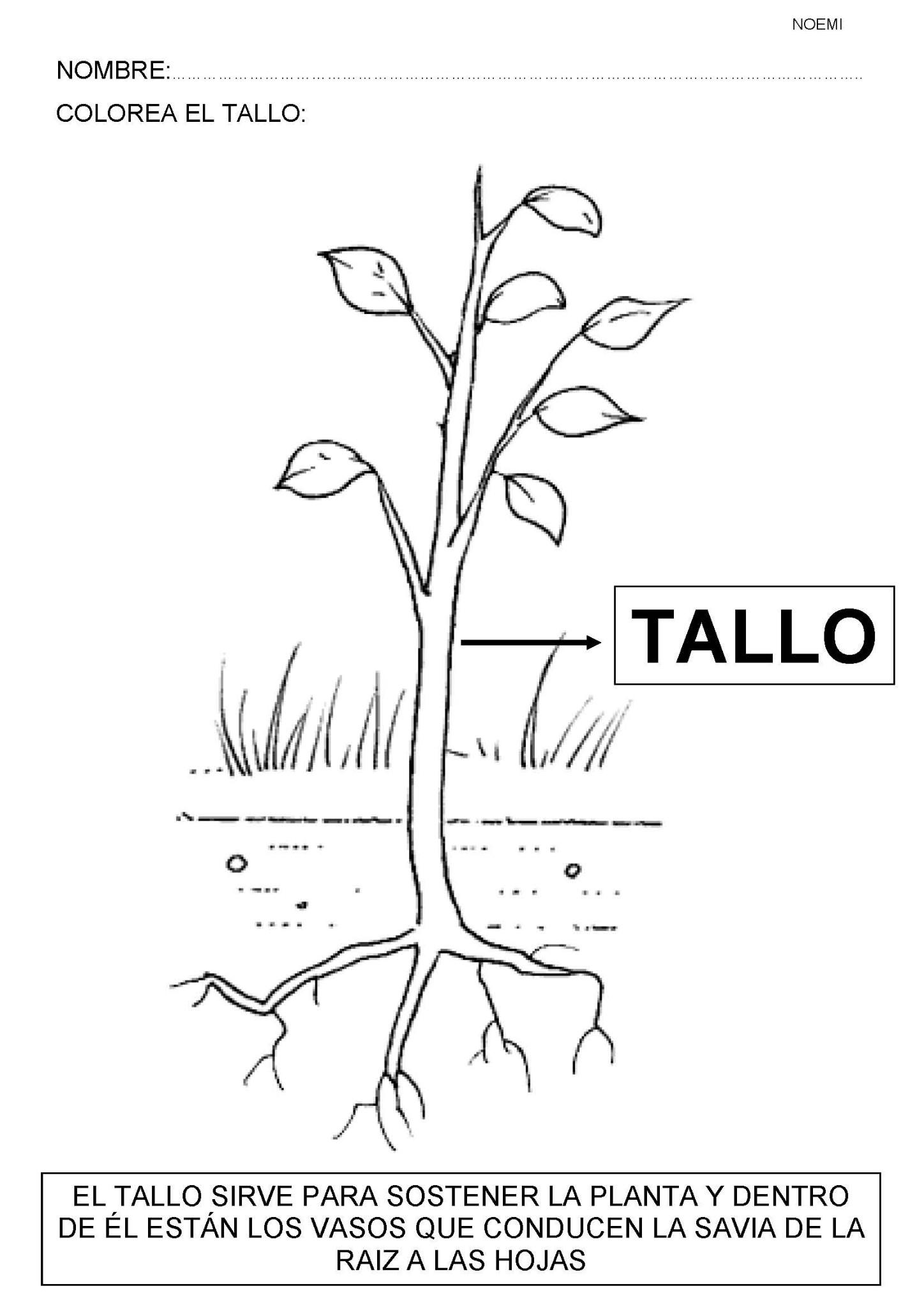Fichas de actividades para trabajar con las plantas