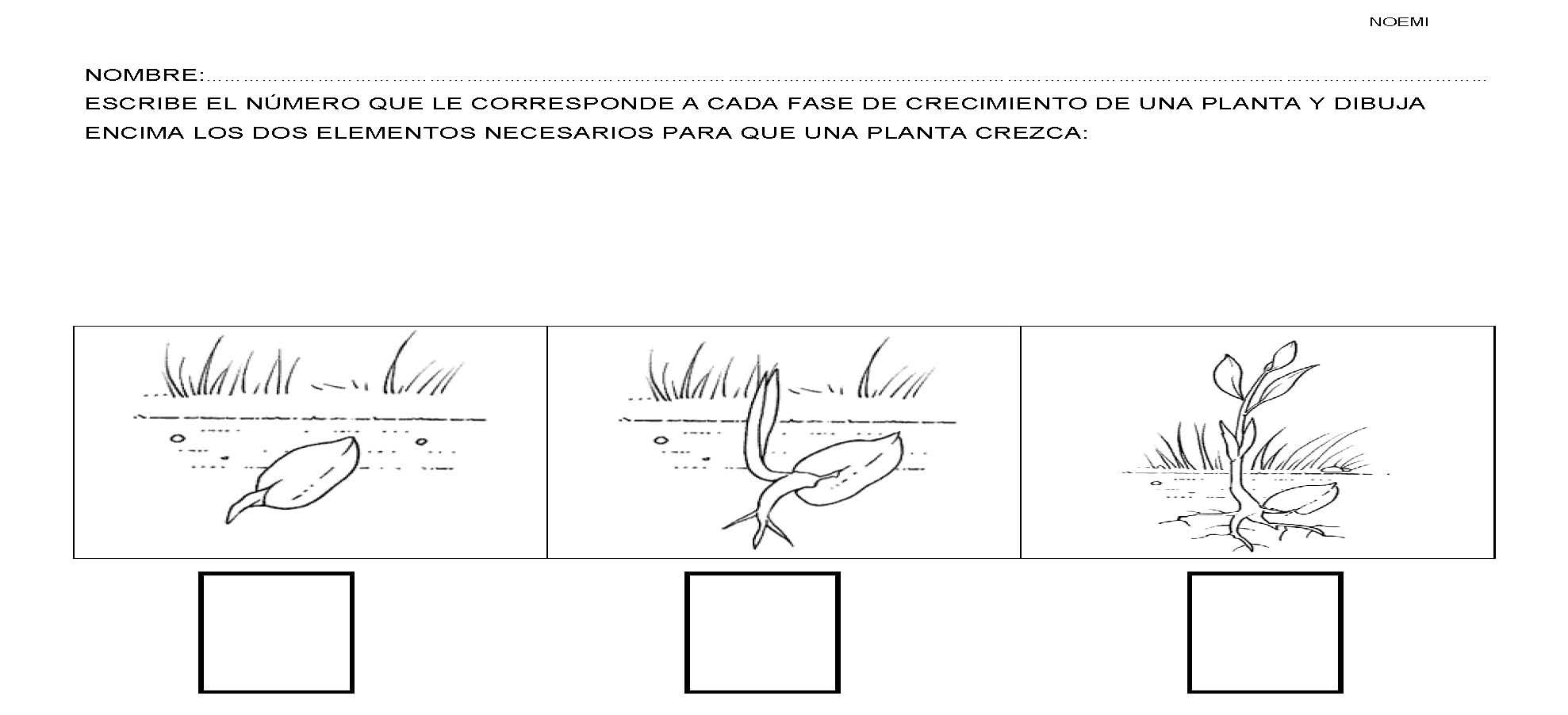 04plantas - Fichas de plantas para ninos ...
