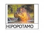 Abecedario con fotos de animales