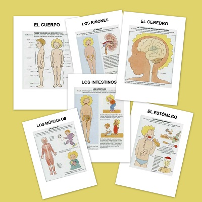 las partes del cuerpo humano y su funcionamiento