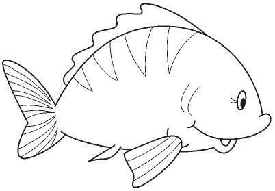 animales marinos14