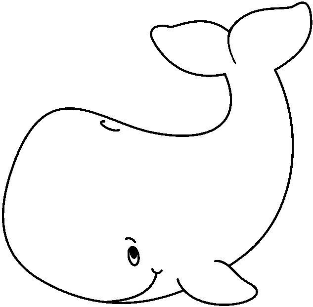 animales marinos50
