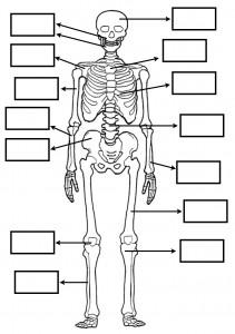 22 Fichas primaria con ejercicios de ciencias naturales