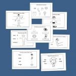 Conocimiento del medio: Fichas del cuerpo humano