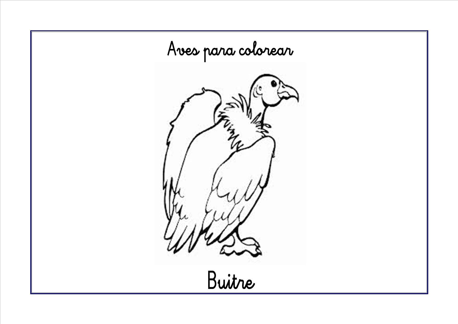 Dibujos para colorear: Las aves