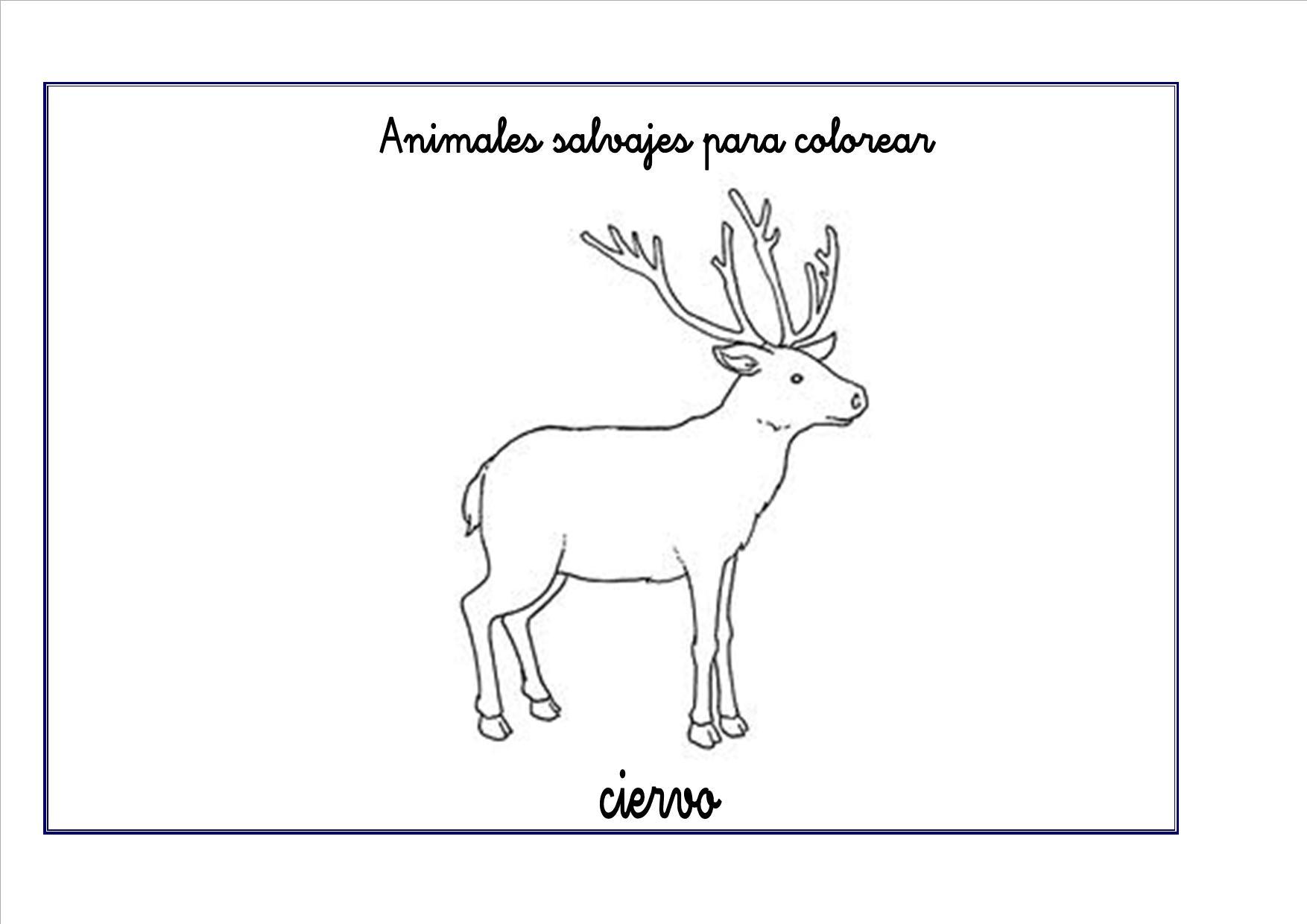 ciervo colorear