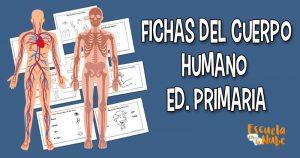 Fichas del cuerpo humano