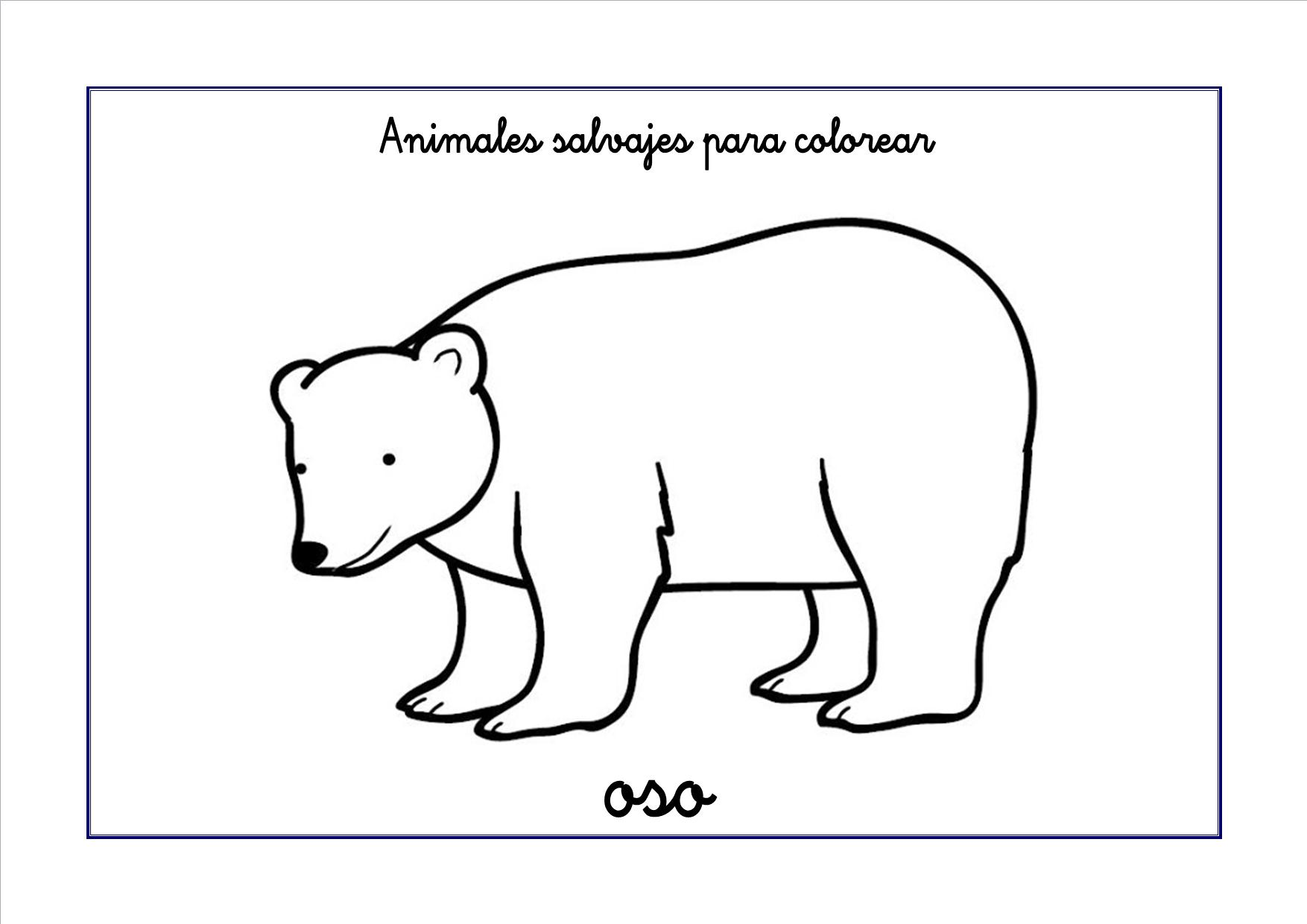 Imagenes • Dibujos para colorear de un oso