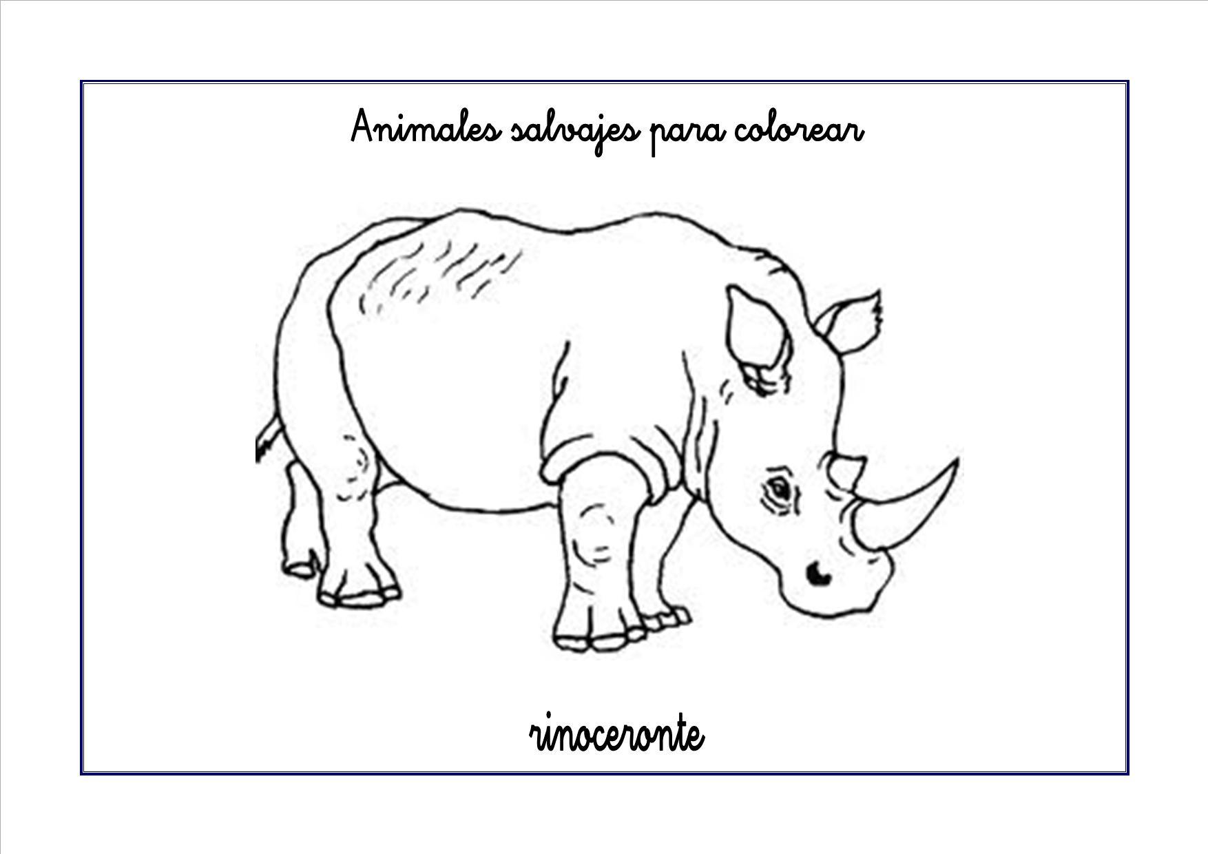 rinoceronte colorear