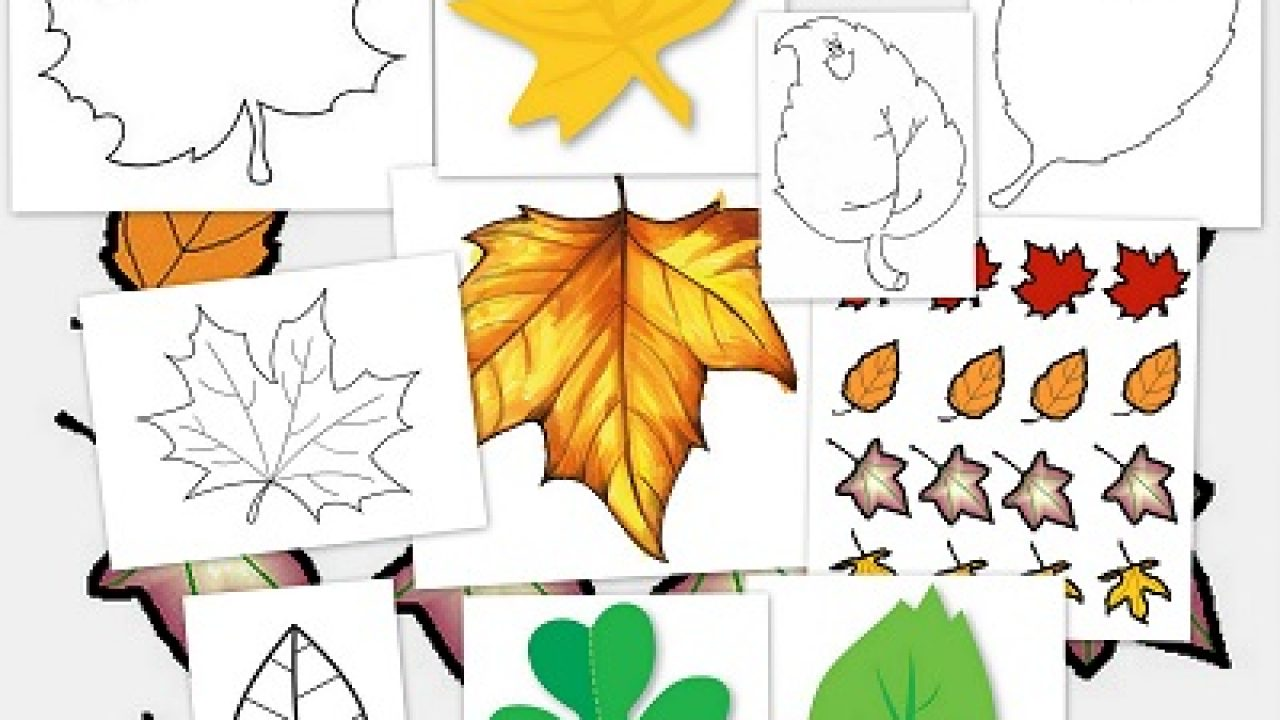 Hoja De Otono Para Colorear Para Dibujo Hoja De Otono Para: Hojas De Otoño Para Imprimir