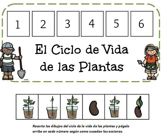 ciclo la vida de las plantas