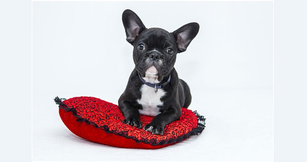 5 tips para educar a tu mascota