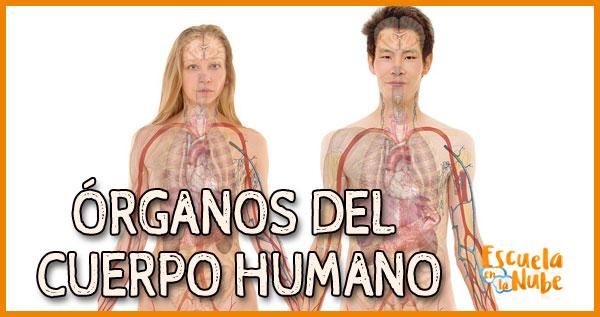 organos del lado izquierdo del cuerpo