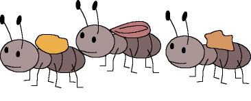 curiosidades sobre las hormigas