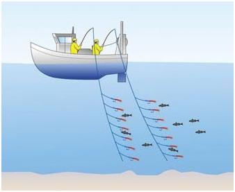 pesca con curricán