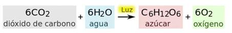 reaccion quimica fotosintesis